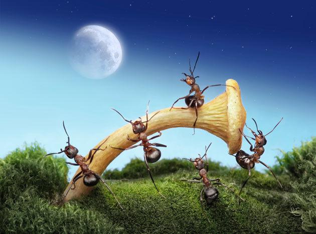fantasy world of ants