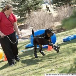 Quadruple Amputee Dog Gets Prosthetics On All Limbs So He Can Have A Fuller Life