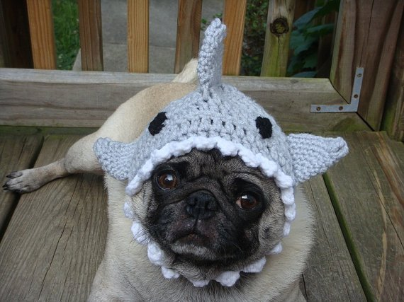 5. Shark Hat