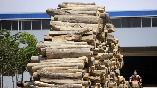 Activists: China at center of illegal timber trade