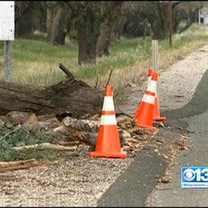 Tree Falls On I-80 Near Vacaville, 1 Killed