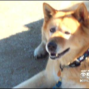 SUV Stolen With Dog Inside; Found Dead Days Later In San Jose