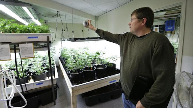In this photo taken Thursday, April 4, 2013, Mike Steenhout, comptroller of Washington's Liquor Control Board, takes photos as he tours a marijuana growing facility in Seattle. Spreadsheets, statistics and bean-counting are Steenhout's regular realm of expertise. Now, he's a weed guy. Washington's vote last fall to legalize marijuana for adults over 21 and set up a system of state-licensed pot growers, processors and retail stores left dozens of Liquor Control Board employees in the position of having to research and help regulate a substance that many knew little to nothing about. While the state has hired a Massachusetts firm to serve as its official marijuana consultant, the Liquor Control Board is also doing its own work--a cannabis crash-course. (AP Photo/Elaine Thompson)