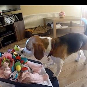 Video: Real or Fake? Dog Fetches Toys for Crying Baby