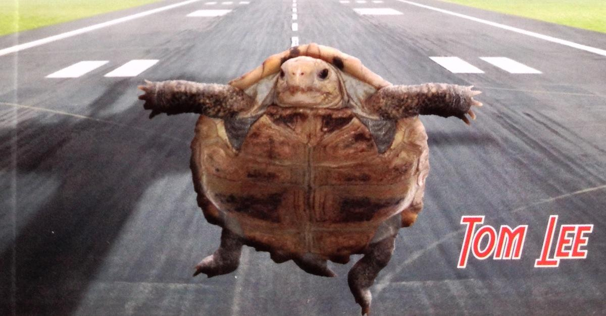 What's that turtle doing on the runway?!