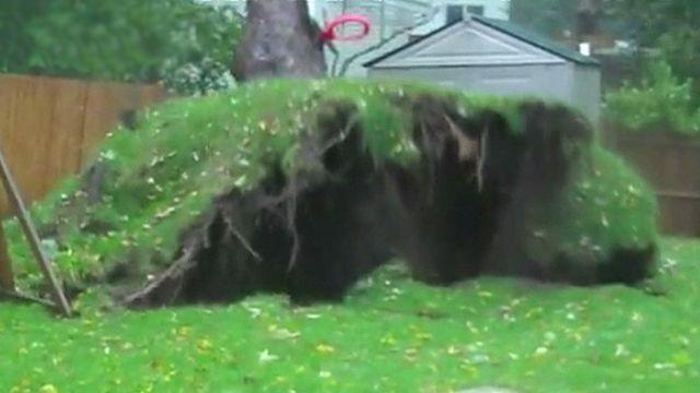 Massive tree uprooted by monster storm