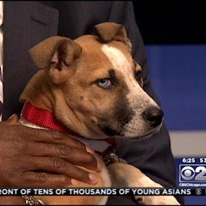 PAWS Pet Of The Week: Ginger