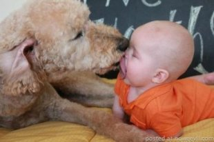 Puppy-baby mutual admiration