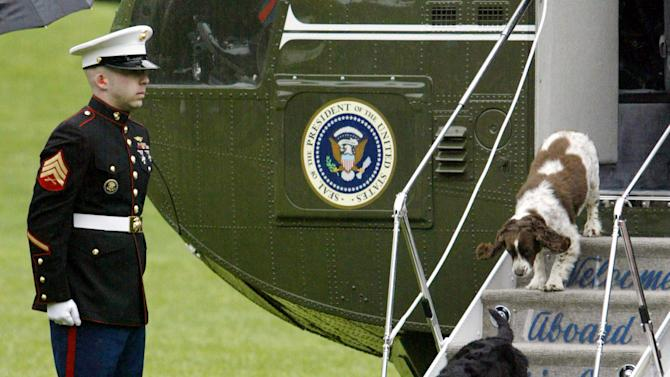 U.S. President George W. Bush's pet dogs, Barney (bottom) and Spot (top) step off Marine One under t..