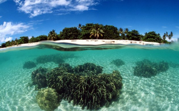 Coral reef, Turtle Islands. Philippines Copyright: © Jurgen Freund / WWF-Canon