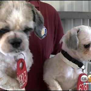 Dozens Of Rescued Phelan Dogs Get Makeovers