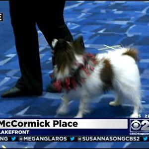 Dog Show Takes Over McCormick Place
