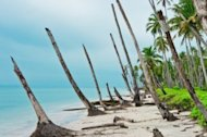 The One Video Every Company Should Have? Not What You Think image 012032283 desert island coastline after 300x199