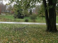 The wrath of hurricane Sandy which is one lonely tree branch fallen in our yard.