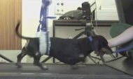 Paralysed Dogs Walk Again After New Treatment