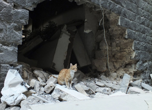 A cat sits on the debris of …