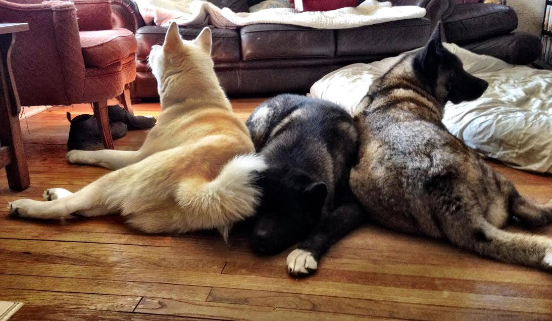 """Dog who lost both eyes gets her own """"seeing-eye dogs"""""""