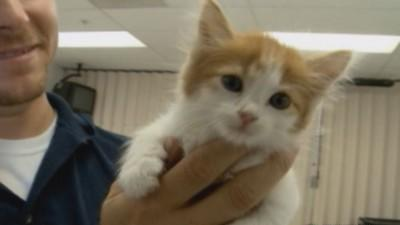 Kitten rescued after getting trapped in ceiling