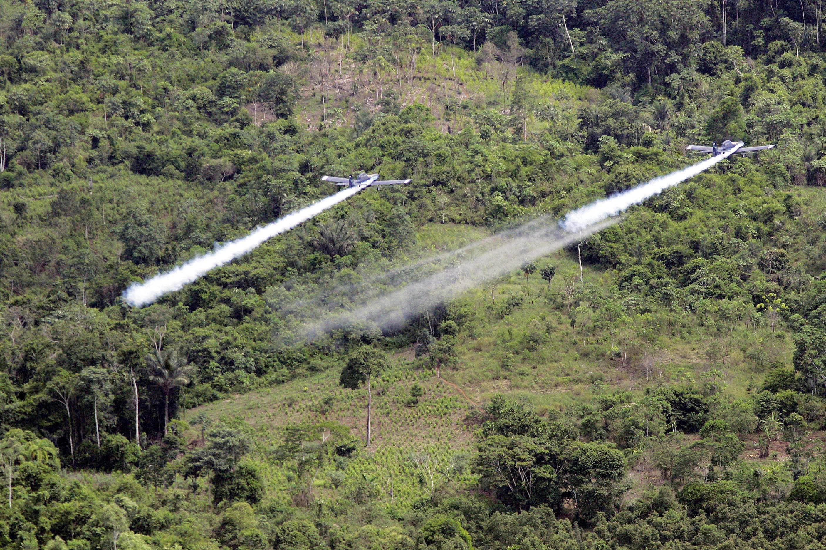 Coca production in Colombia jumped 39 pct in 2014