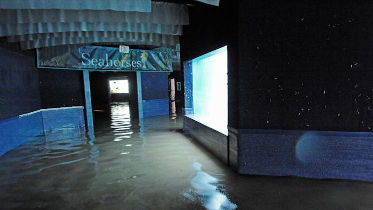 In this Nov. 1, 2012 photo provided by the Wildlife Conservation Society, floodwaters cover the floor of Coney Island's New York Aquarium after Superstorm Sandy passed through. Unless power is restored soon, the aquarium says it may have to relocate 12,000 creatures, including walruses, sharks, sea turtles, penguins and a giant octopus. (AP Photo/Wildlife Conservation Society, Julie Larsen Maher)