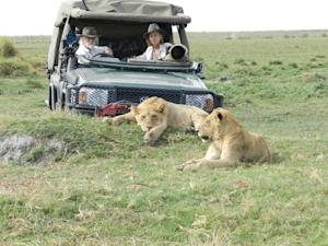 Becoming King: Why So Few Male Lions Survive to Ad …