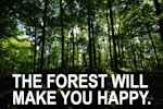 Forest trees happy