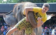An elephant lifts a tourist during a show in Pattaya, on March 1, 2013. Smuggling the world&#39;s largest land animal across an international border sounds like a mammoth undertaking, but activists say that does not stop traffickers supplying Asian elephants to Thai tourist attractions