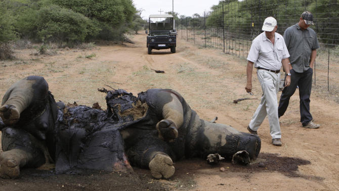 FILE - In this Friday Nov. 22, 2012 file photo, Miles Lappeman, owner of Finfoot Lake Reserve near Tantanana, South Africa, and his son Marc, right, walk past the carcass of one of eight rhino killed by poachers. South African officials said Tuesday April 22, 2014, that thieves have stolen a stockpile of rhino horns from the offices of a provincial parks agency, dealing a setback to efforts to curb an escalation of rhino poaching in recent years. (AP Photo/Denis Farrell, File)