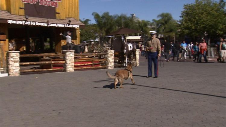 War dog gets hero's welcome in Universal City