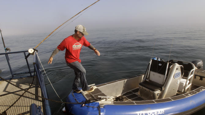 In this Sept. 7, 2012, photo, Ocearch expedition leader Chris Fischer steps onto a small sport fishing boat to check chum locations for signs of great white shark activity in the Atlantic Ocean off the coast of Chatham, Mass. The Ocearch team baits the fish and leads them onto a lift, tagging and taking blood, tissue and semen samples up close from the world's most feared predator. The real-time satellite tag tracks the shark each time its dorsal fin breaks the surface, plotting its location on a map. (AP Photo/Stephan Savoia)