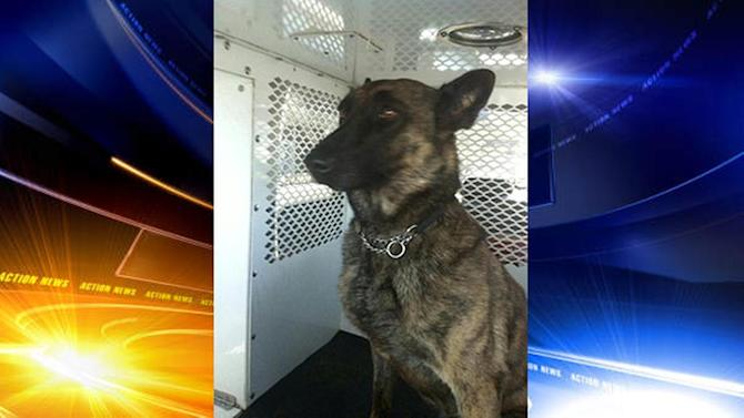 Missing K-9 officer from Frankford found safe