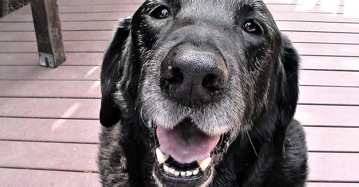 15 Things For Everyone Who Has Lost a Dog