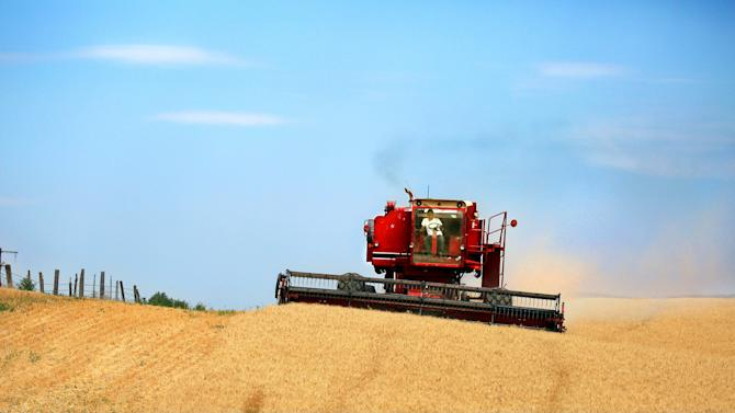 FILE - In this July 24, 2013 file photo, a combine harvests wheat along the Oregon-Washington border, southwest of Walla Walla, Wash. The source of a patch of genetically modified wheat found Spring 2013 in Northeastern Oregon remains a mystery, and farmers say they are going ahead with plans to plant their winter crop in coming weeks. (AP Photo/Walla Walla Union-Bulletin, Jeff Horner File)