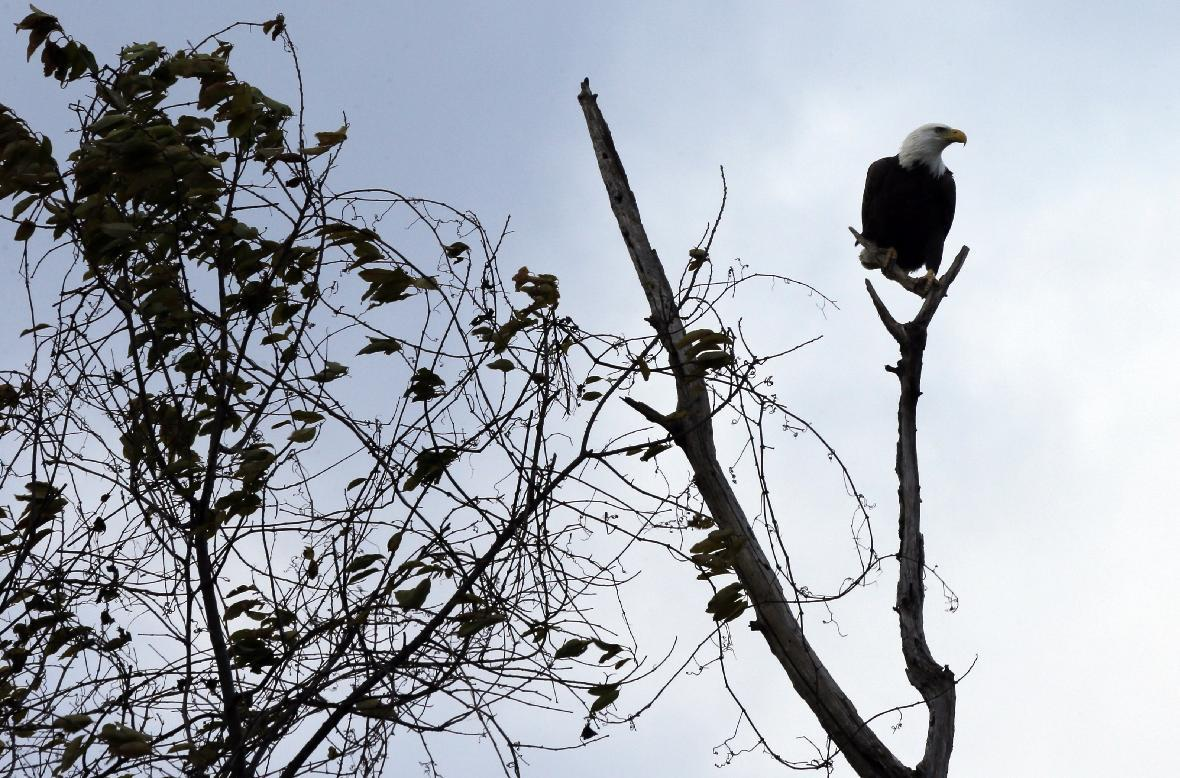 A proposed luxury resort where eagles soar stirs anger