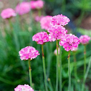 Common thrift