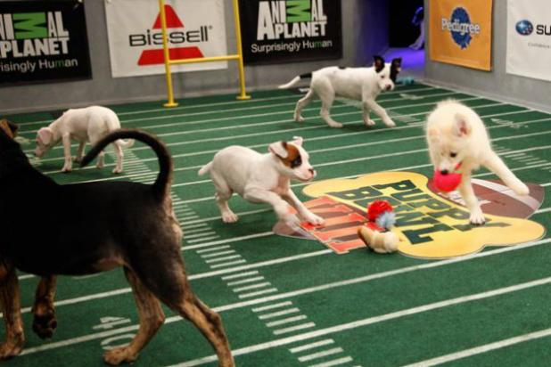 Animal Planet Calls Hallmark Channel's 'Puppy Bowl' Rip-Off a 'Copy Cat'