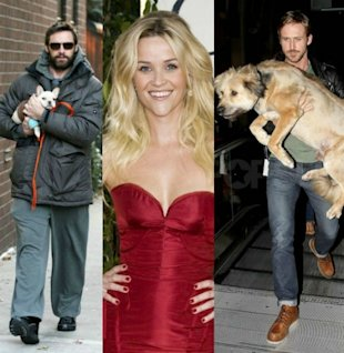Celeb pet owners