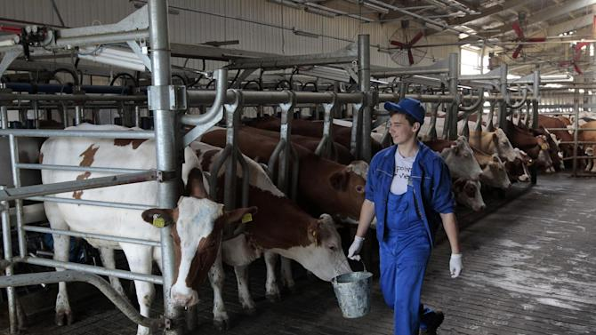 A worker walks past cows on the dairy farm, at the Milkiland village Krasnoselskoe, in the Chernihiv region some 180 kilometers north Kiev, Ukraine, Wednesday, June 25, 2014. For years, Russia was the cash cow for Ukrainian dairy producer Anatoliy Yurkevych. These days he's looking to skim some of the cream in the European Union _ thanks to Ukraine's sweeping new trade deal with the EU. The deal, set to be signed on Friday, June 27, 2014 by President Petro Poroshenko in Brussels, would give Ukraine's economy and society a massive shove toward Europe. The agreement lowers trade tariffs and in theory opens Europe's market of 506 million people _ if Ukraine can comply with the many complex provisions in the 1,200-page document that will take 10 years to implement. (AP Photo/Sergei Chuzavkov)