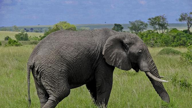 Close encounter with Wild Africa