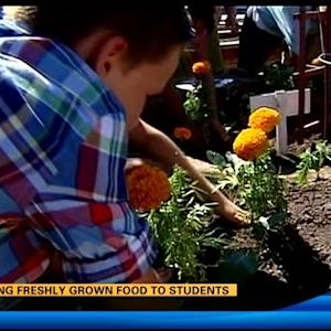 Serving freshly grown food to students