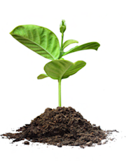 10 Tips for Better Event Marketing image Nurture little green sprout in dirt