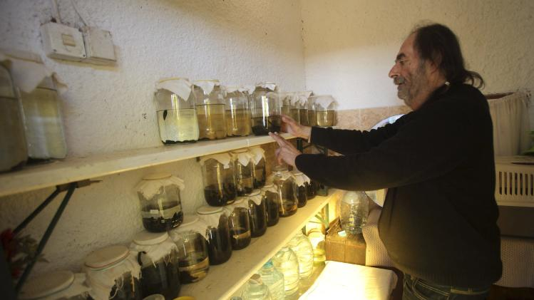 Pino Gambar, a medical assistant, inspects leeches in bottles at the clinic of his wife and doctor Tatijana Gambar in Porec