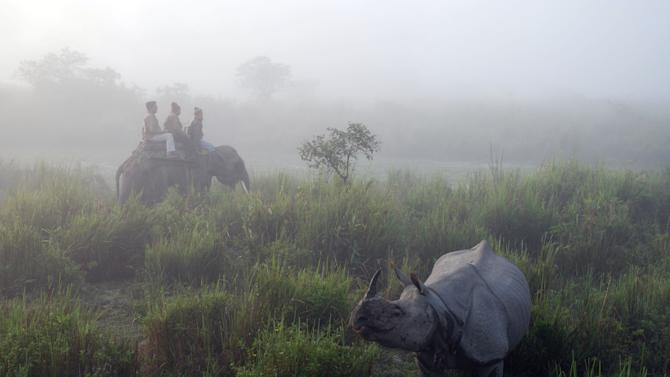 In this photo taken Dec. 3, 2012, tourists at the Kaziranga National Park take an early morning ride to view one-horned Indian rhinos in the mist in Assam's tea country in Kaziranga, India. Elephants, monkeys and other wild animals often wander through the tea estates. (AP Photo/Denis Gray)