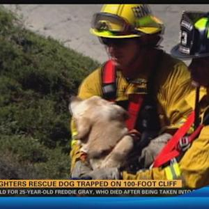 Firefighters rescue dog trapped on Encinitas cliff