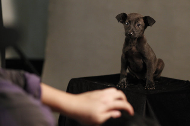 In this photo taken on Monday, April 9, 2012,  in a makeshift studio, Taiwanese photographer Tou Chih-kang tries to make a portrait of a dog in the final moments of its life before being put down by l