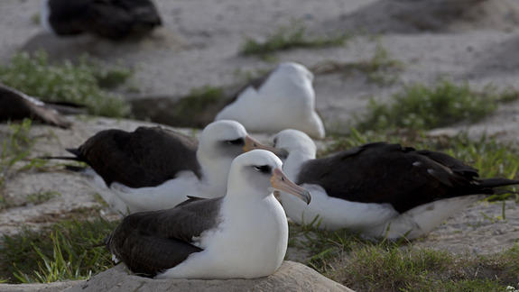 World's Oldest Wild Bird Just Became a Mom for the 40th Time