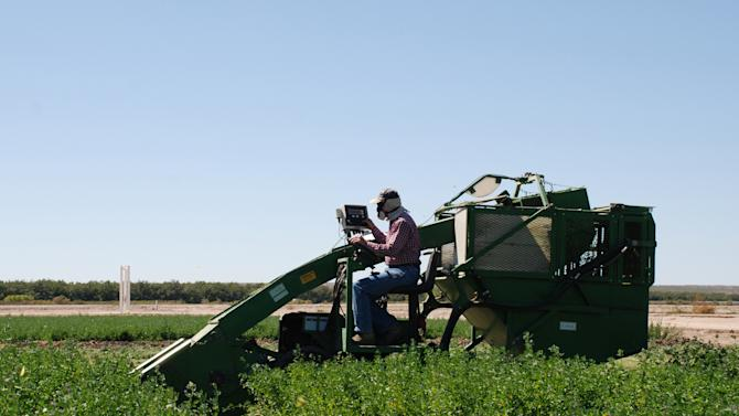 This undated photo provided by New Mexico State University shows research technician Christopher Pierce logging alfalfa harvest data while operating a forage plot harvester at an NMSU science center near Las Cruces, N.M. NMSU researchers are using genetic analysis with traditional plant breeding to develop alfalfa varieties that are more drought tolerant. (AP Photo/New Mexico State University, Jay A. Rodman)