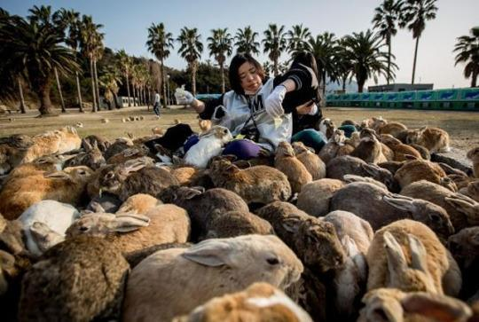 15 Islands Overrun By Cute Animals