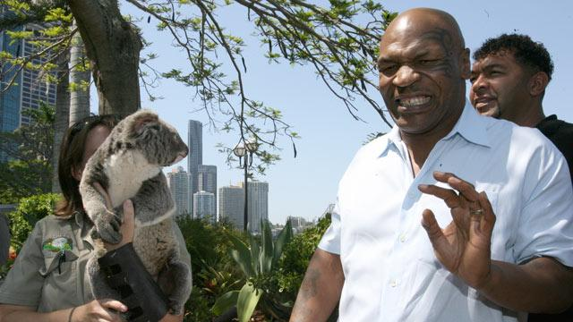 Mike Tyson No Match for Koala
