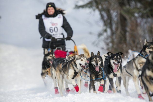 Cindy Abbott's team charges down the trail after the re-start of the Iditarod dog sled race in Willow, Alaska